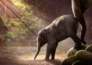 Apprendre, apprendre et encore apprendre pour avoir une mémoire d'éléphant